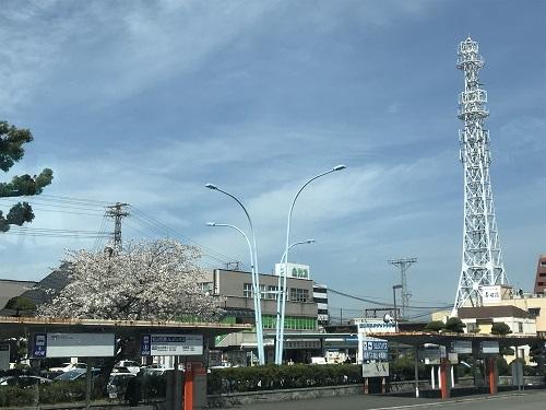 桜が咲いてます